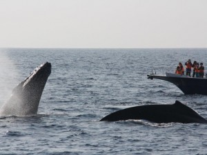 whale_watching_img006_2