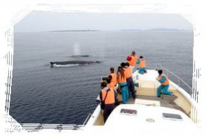 whale_watching_img014
